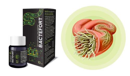 Bactefort - o compoziție naturală a produsului